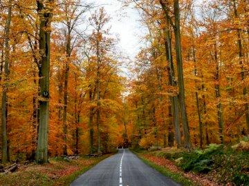 Marie-Do - Słoneczna leśna aleja jesienią