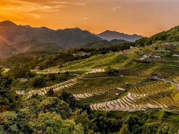 Rice terraces - sunset -------------