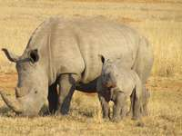 Układanka Rhino dla dzieci
