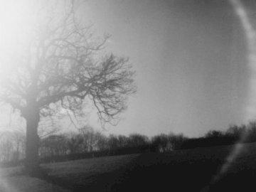 Le soleil brille sur un arbre - Photo silhouette d'arbre. Royaume-Uni