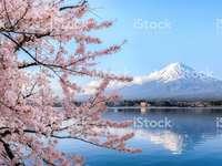 Japanisch - Japanischer Kirschberg im Frühjahr