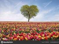 Růže z. Srdce strom poznámka
