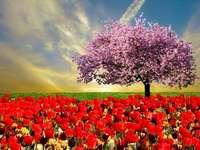 Jarní růže