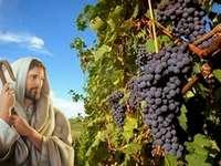 Jézus a szőlőben - Jézus sétál a szőlőben, és a gyümölcsre néz.