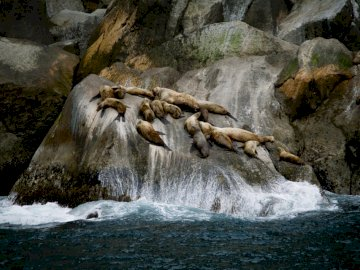 The Shores of Kenai Fjords - Group of sea lions on rock formation near sea during daytime. Salt Lake City, Utah
