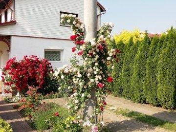 flores a pleno sol - flores en el jardín a pleno sol