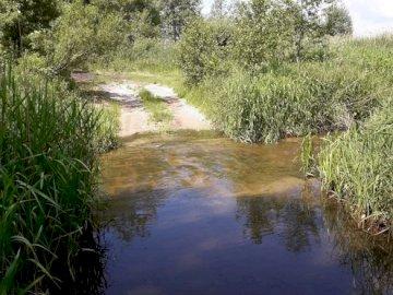 woda i szuwary - widok na wodno-ziemny krajobraz