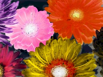 Puzzle flowers - Beautiful flowers on a dark background