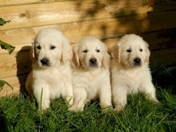 cachorros - Foto del perrito