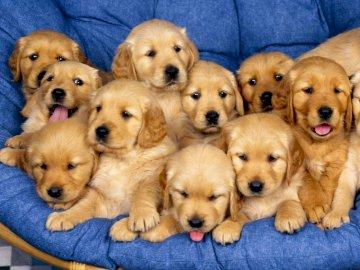 Perritos - Un montón de perritos