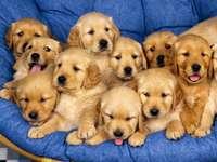 Малки кучета