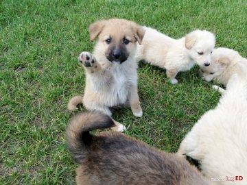 Adorables cachorros - Cachorros adorables