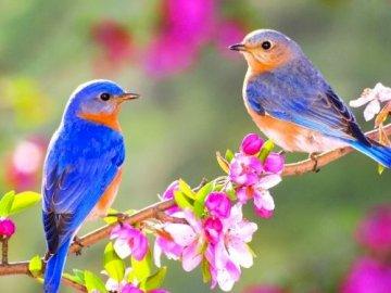 Vögel - Setze das Vogelpuzzle neu zusammen