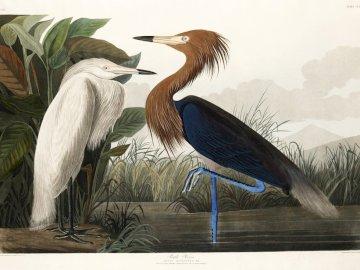 Bird Day - Birds among nature