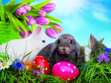 Rabbits and Easter eggs - Easter is coming soon
