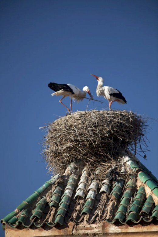 marie-do - The stork's nest under an azure sky