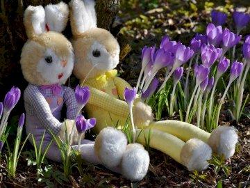 Lapins et crocus - Le premier signe du printemps - les crocus