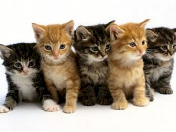 chats femelle - Anastasia, Anastasia, Anastasia, Anastasia.