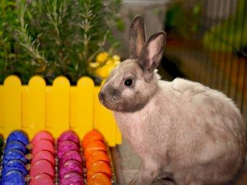 Que fais-tu lapin - Lapin pour enfants pour Pâques
