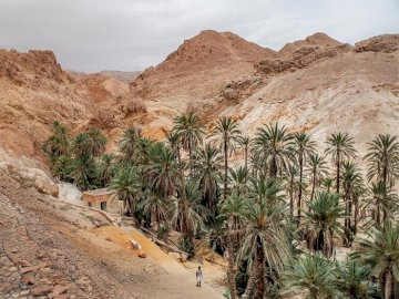 Tunisia.. - palm grove in the oasis of Szabik