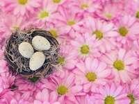 un nid de printemps
