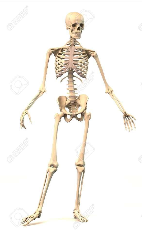 Mänsklig kropp pussel