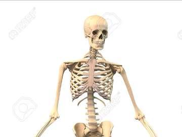 Menschlicher Körper - Ein menschliches Körper-Puzzle, um Knochen an die richtige Stelle zu bringen