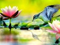 Pássaro azul, flores