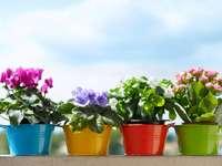 Bloemen, bloempotten