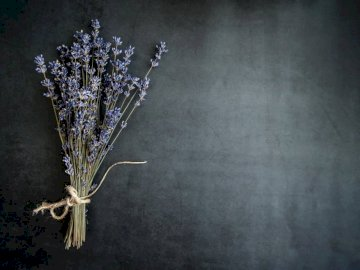 Simple hero image with lot's - Purple lavender flower.