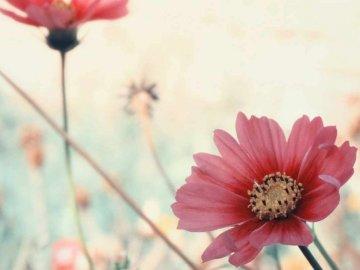 fleurs ............... - fleurs