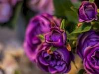fleurs  - flores