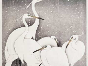 White herons in space - Picture of herons in space