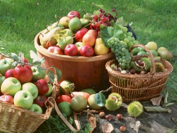 Owoce,koszyki - Jabłka,gruszki,koszyki
