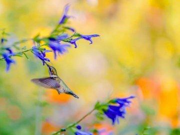 fleurs  - Blumen