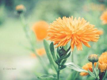 fleurs  - λουλούδια