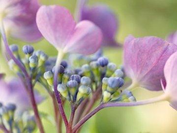 kwiaty.............. - kwiaty