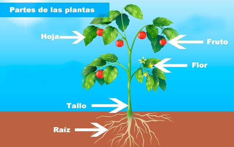 Părți ale plantei - Părți ale etajului 2 (20×13)