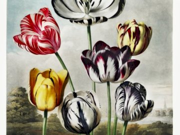 Different types of flowers - Painted flowers against the sky