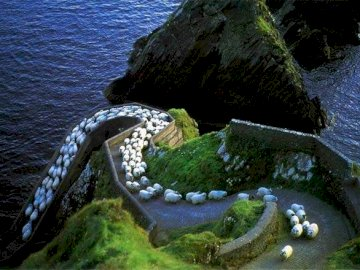 Sheep's highway - Sheep Highway, Ireland