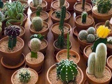 kaktusów moc - Rodzinne spotkanie w dobie kwarantanny :)