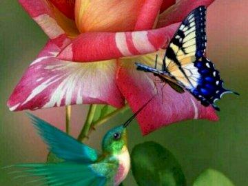 Fiore, uccello e farfalla