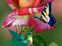 Bloem, vogel en vlinder - mooie bloem, mooie vlinder en mooie vogel