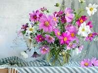 Blumen Kosmea, Bazon