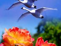 Pretty landscape - Geese fly over beautiful flowers Nice picture