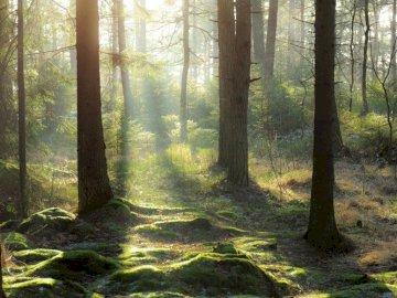 Natura w Szwecji - naturalny las w Szwecji