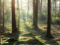 Természet Svédországban