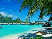 trópusi sziget, pálmafák