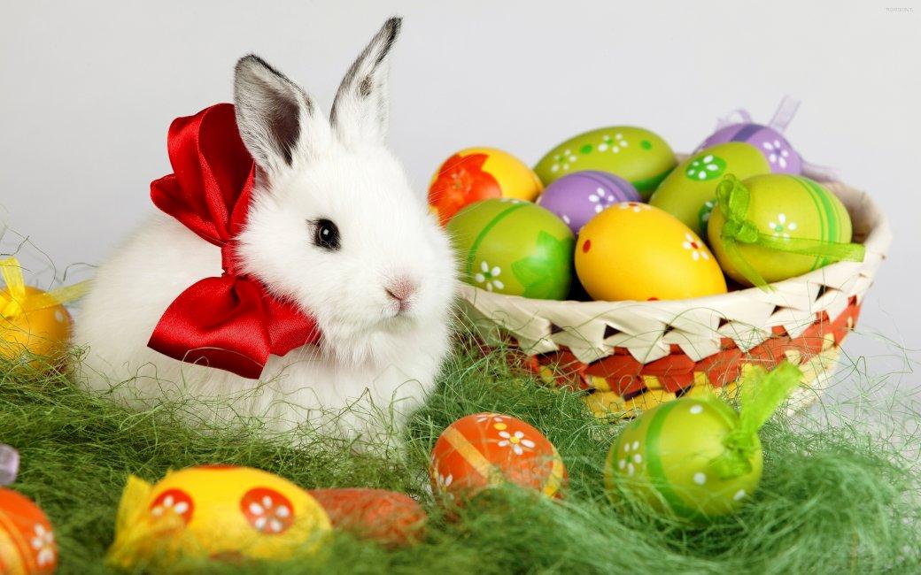 Pasen - Kerst foto met een konijn (5×5)