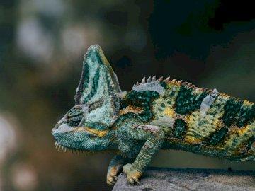Tierra por delante! - Fotografía de enfoque selectivo de lagarto verde y amarillo. Estados Unidos